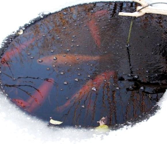 Как подготовить пруд к зиме, сохраняем рыбу.